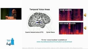Odyssey 2018 - Keynote - A Vocal Brain: Cerebral Processing of Voice Information